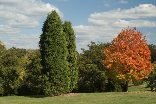 Autum Foliage